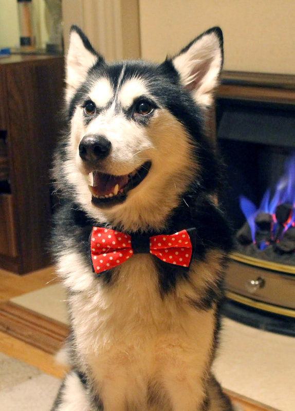 Pet Bow Tie Reversible Bow Ties For Cats And Dogs