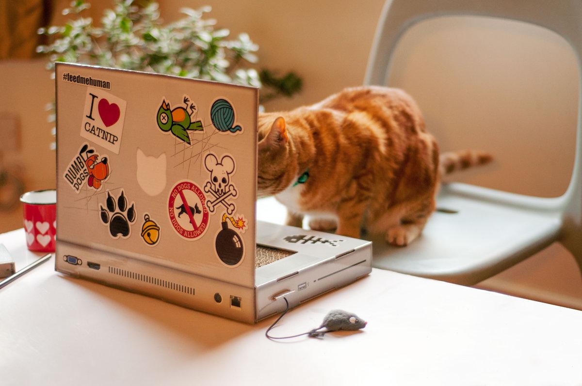 how to get kitten off laptop