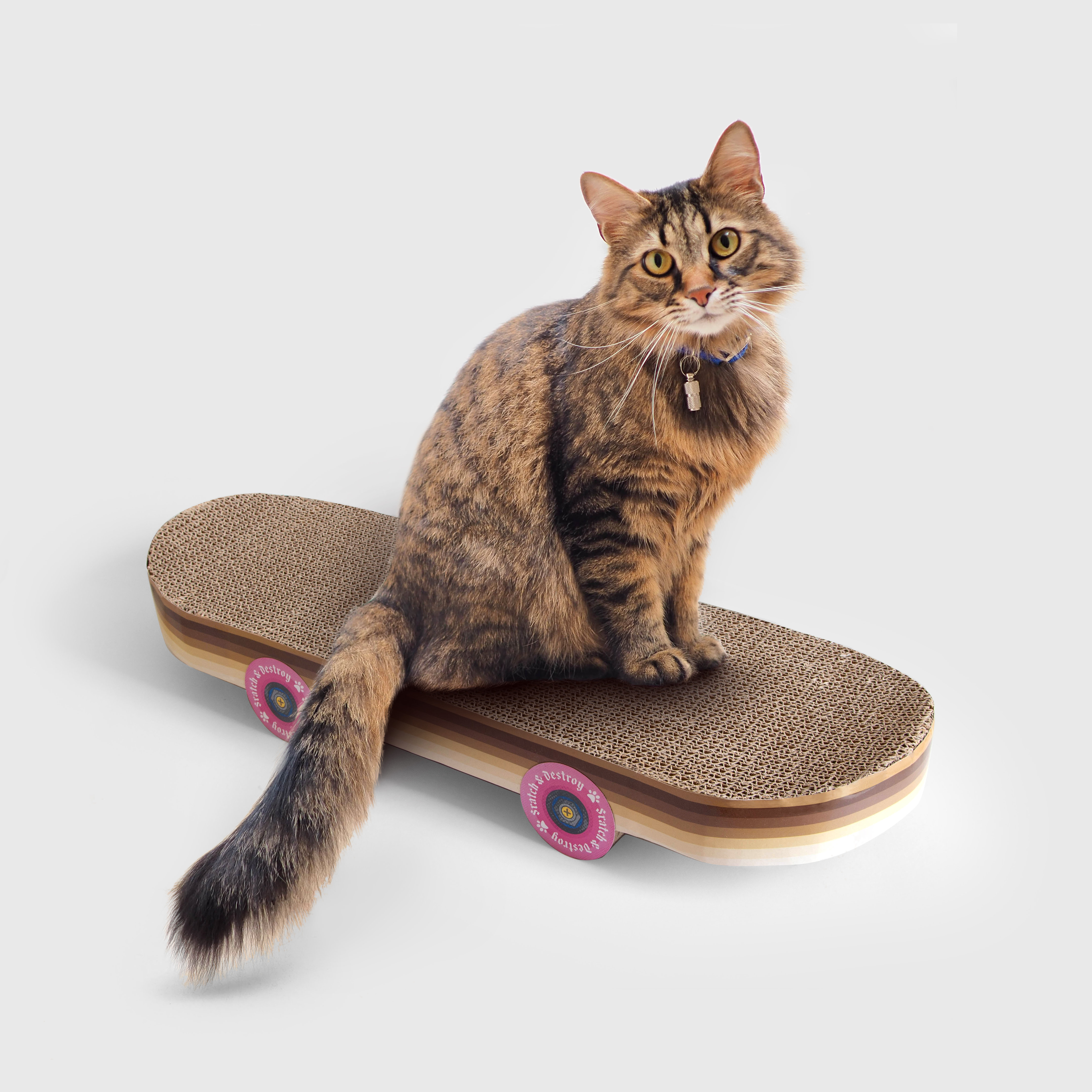 Cardboard scratching skateboard for cats