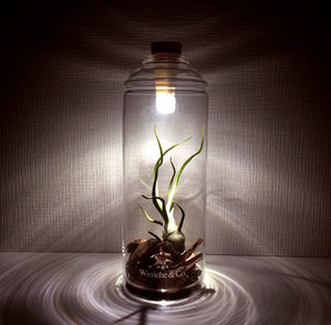 Bottle Light shown illuminating a terrarium.