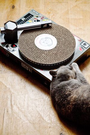 CAT DJ asleep at the wheels of steel