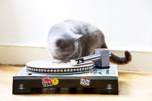 DJ Cat scrtaching up the decks