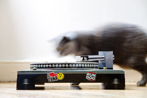 Cat DJ on the wheels of steel