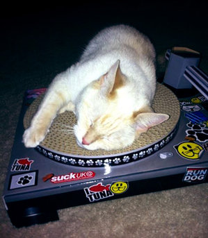 Cute cat sleeping on turntable
