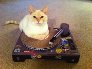 Cat DJ on the decks