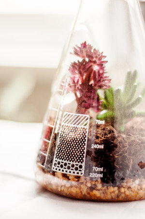 Chemistry flask terrarium for growing small plants in their own ecosystem.