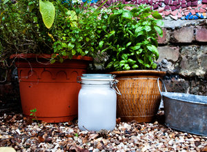 frosted mason jars in garden at daytime