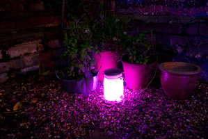 pink garden lights at night in UK