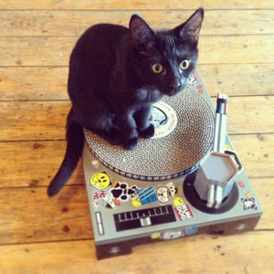 Cute black cat sitting on a record player